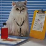 Препараты коту от глистов