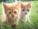 Глисты у котят