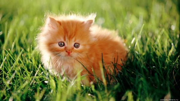 Глисты у кошек и котят: симптомы