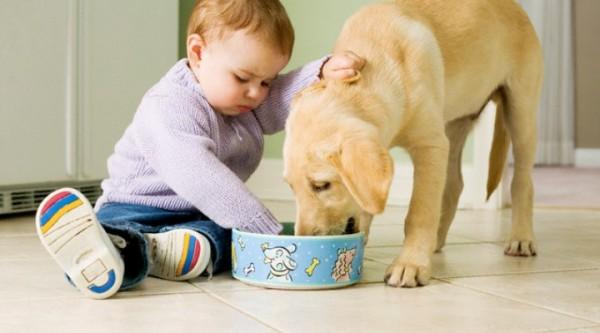 Паразиты у домашних собак, симптомы, лечение