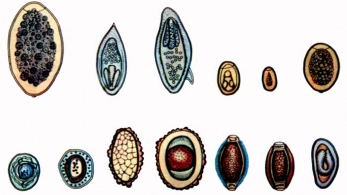проявляют паразиты в организме