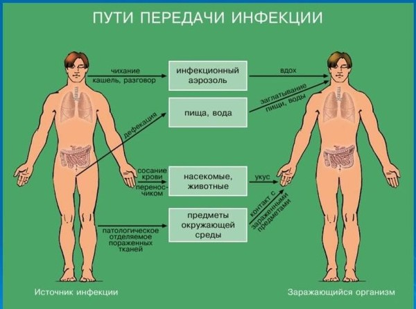 infekcionnye-zabolevanija-bakterii-e1445263803295