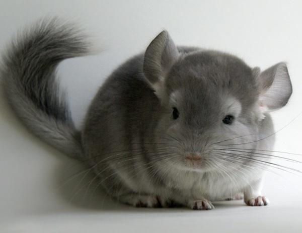 Глисти у животних: как паразити угрожают животним