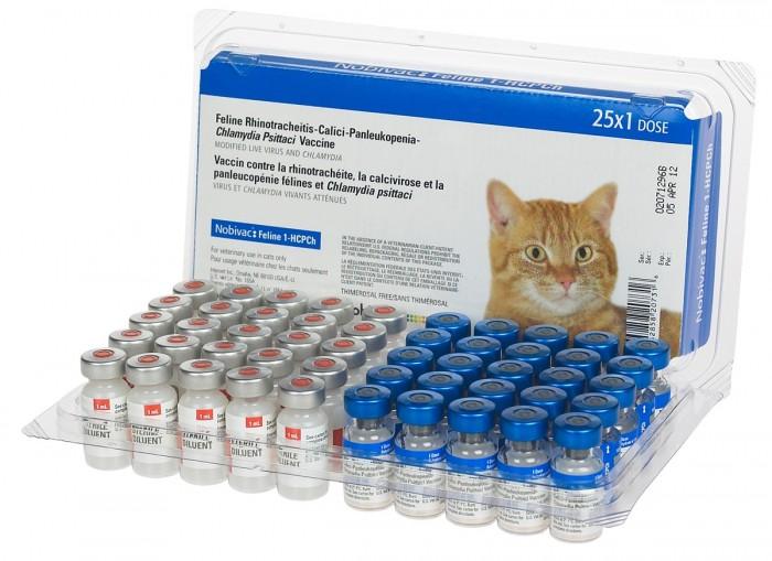 Хламидиоз у кошек симптоми и лечение