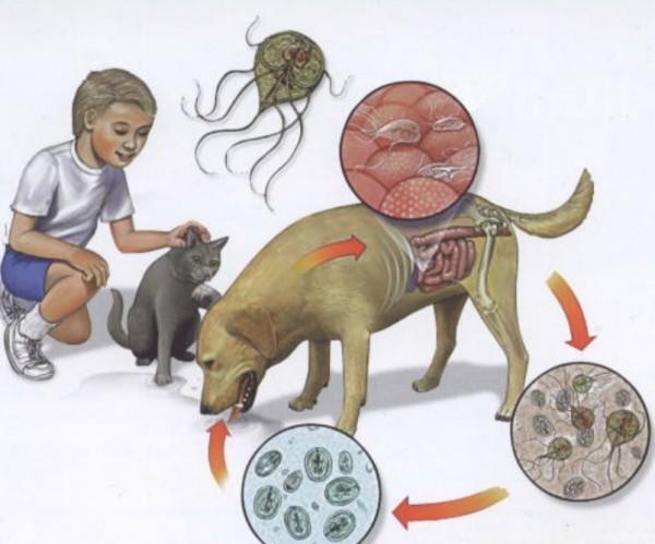 форум паразиты человека