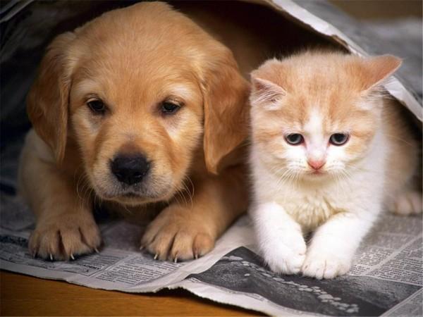 Лямблиоз у кошек и собак