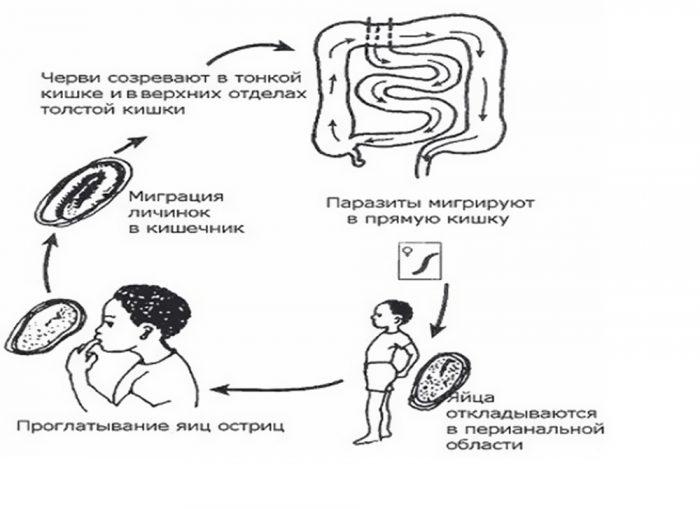 Ентеробиоз что это? Симптоми и лечение