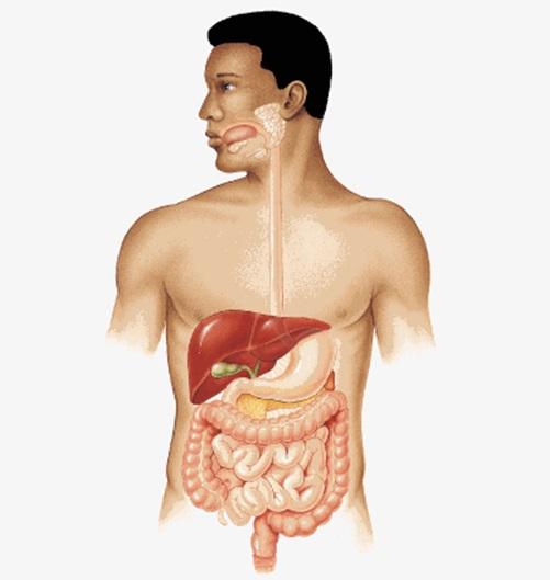 паразиты в виде слизи у человека